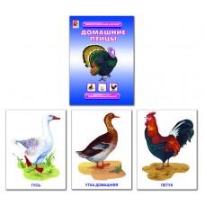 Домашние птицы. Демонстрационный материал
