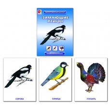Зимующие птицы. Демонстрационный материал